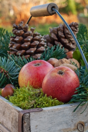 basket with fir branches, holly branches,nuts, apples, moss and pine cones photo
