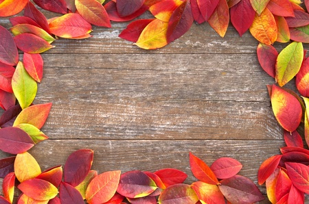 frame of colorful leaves on a wooden background photo