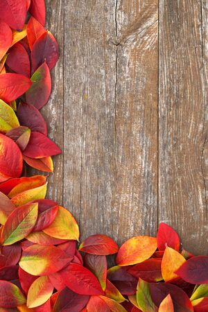 colorful leaves on a wooden background photo