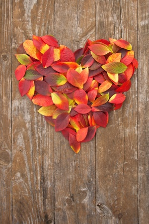 on leave: heart of colorful leaves on a wooden background Stock Photo