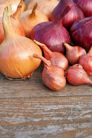 cebollitas: cebollas rojas y amarillas sobre la mesa de madera
