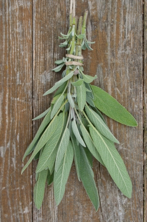 herb bouquet with sage Stock Photo