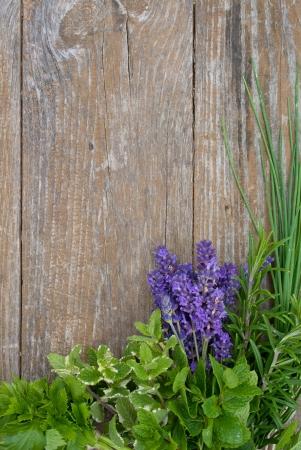 Lavendel, rozemarijn, knippen Lach, dragon, munt, selderij, bernagie, citroenmelisse
