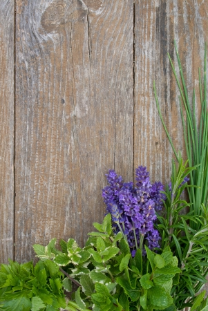 Lavender, rosemary, cut Lach, tarragon,  mint, celery, borage, lemon balm photo