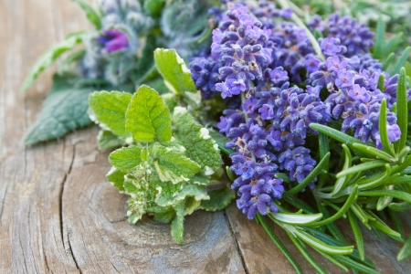 Lavender, rosemary, sage, mint, borage, Stock Photo