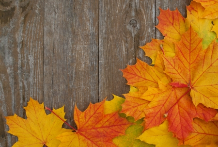 colored leaves on wooden ground