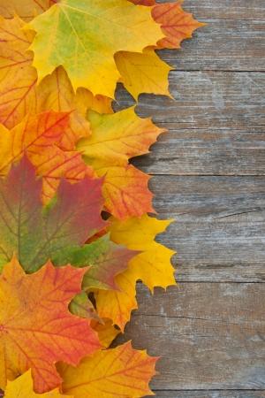 Frontière avec leafes de couleurs sur fond en bois Banque d'images - 16827905