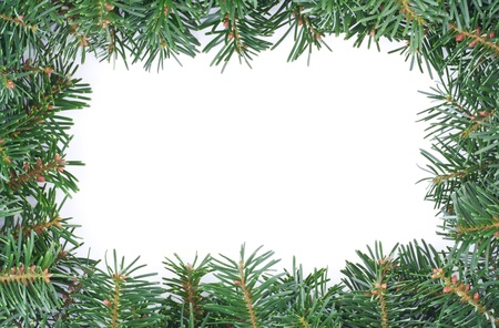 frame with fir branches Stock Photo - 16672761