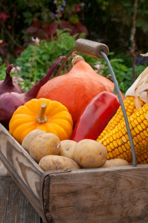 basket with vegetables Stock Photo - 16623615