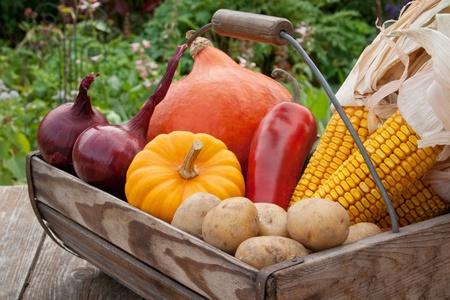 potato basket: basket with vegetables Stock Photo