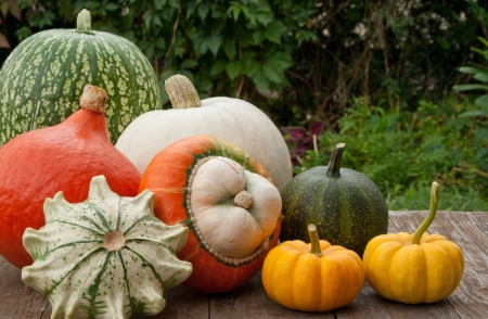 different pumpkins on a wooden table
