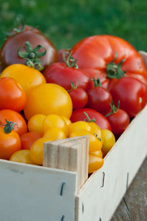 box with red, yellow, orange and brown tomatoes Stock Photo - 16623707