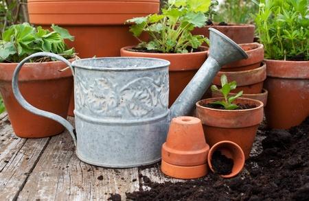 flower pots: flower pots