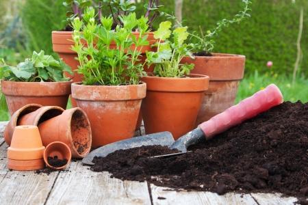 flower pot: flower pots