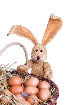 easter bunny with eggs photo