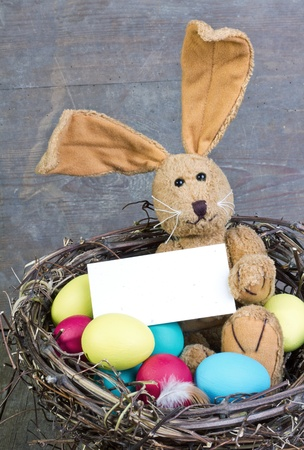 easter bunny in a nest with easter eggs photo