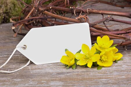 early blossoms: yellow blossoms and white trailer on wooden ground