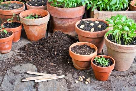 clay pot: flower pots with plants and seeds Stock Photo