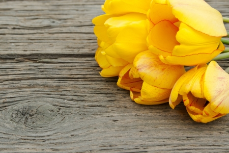 early blossoms: yellow tulips on wooden ground