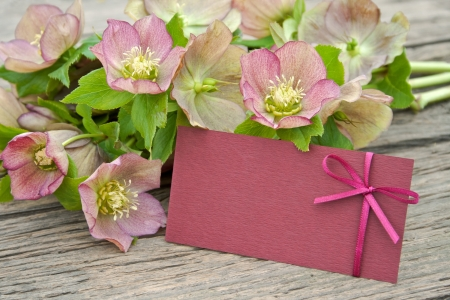 early blossoms: pink blossoms with card on wooden ground Stock Photo