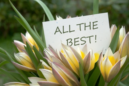 yellow tulips and card with lettering all the best