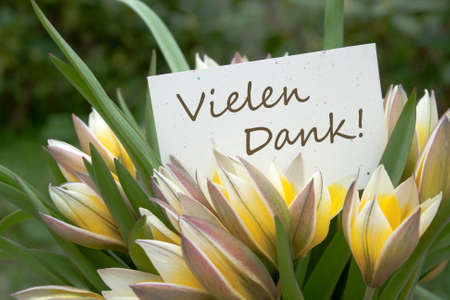 yellow tulips and card with lettering thank you photo