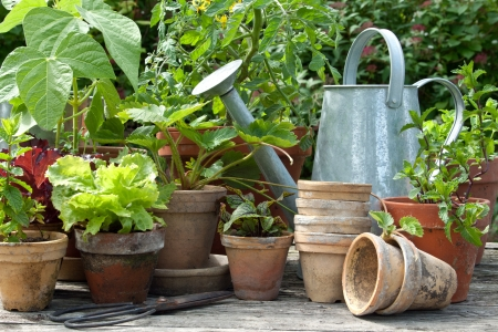 flower pot: Plant pots with vegetables and herbs and watering can