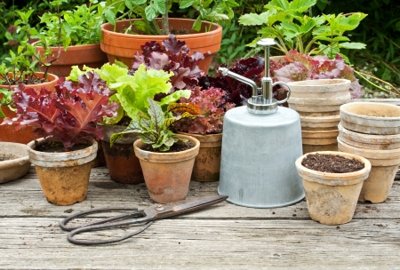 flower pot: Plant pots with vegetables and herbs