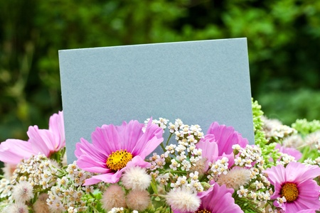 pink flowers with blue card photo