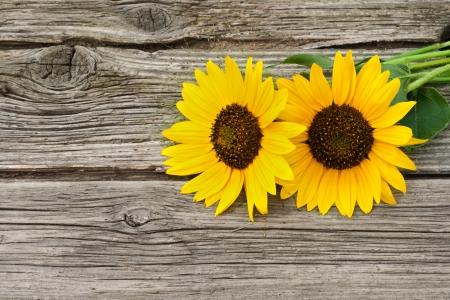 twee zonnebloemen op houten tafel Stockfoto