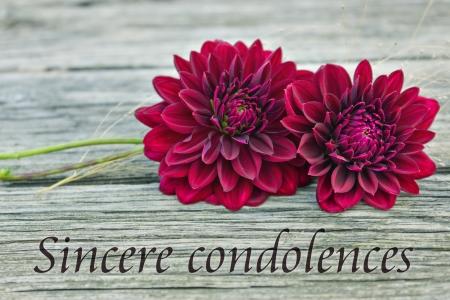 sincere: Condolence with red dahlia sincere condolences english