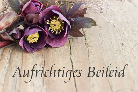 condolence card  with dark christroses Standard-Bild