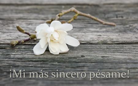 spaans rouw kaart met witte magnolia Stockfoto