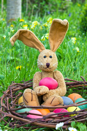 Easter bunny with easter eggs in a nest photo
