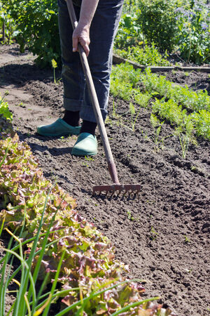 raked: A vegetable garden is raked