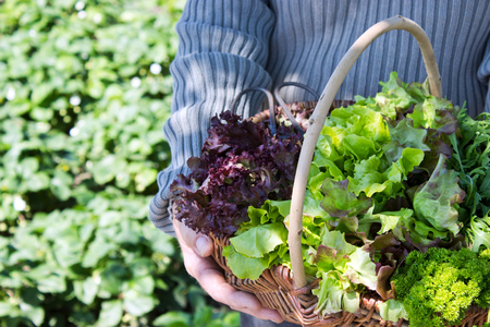 Basket with different fresh salad photo