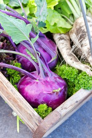 Basket with Turnip greens, white radish and salad