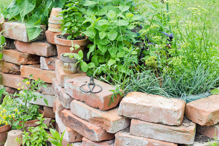Raised bed with herbs