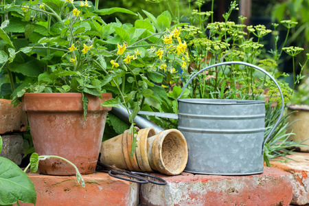 Pots with tomato plant and herbs Stock Photo