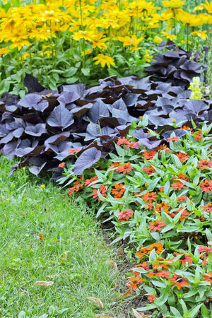 rebates: rebates with summer flowers and grass Stock Photo