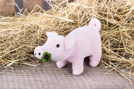 cloverleaf: Lucky pig with cloverleaf