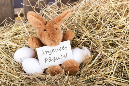 french text: Easter bunny holding a card with french text Happy Easter