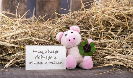 cloverleaf: Lucky pig with cloverleaf and card Happy birthday text with polish Stock Photo