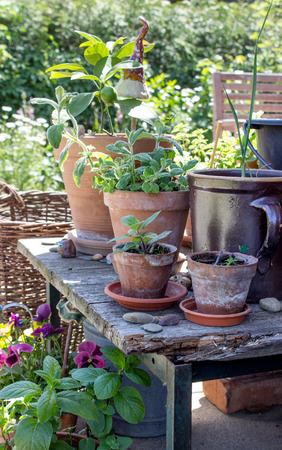 flower pots: Flower pots with herbs, vegetables and flowers on the terrace Stock Photo