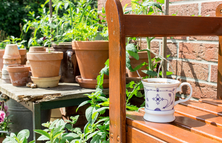 garden bench: Flower pots with herbs and vegetables and coffee cup on the garden bench Stock Photo