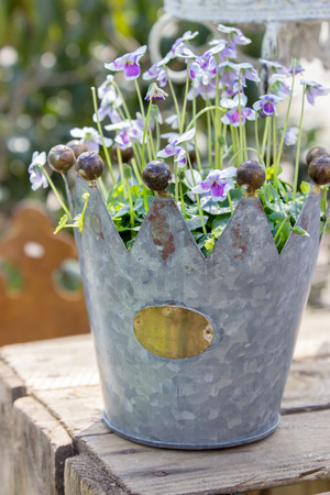 violets: Garden decorations with a crown and purple horned violets Stock Photo