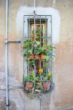 ventanas con rejas en las ventanas y varias plantas en macetas