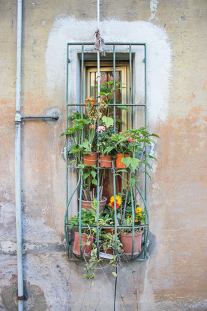 window bars: Windows with window bars and various potted plants