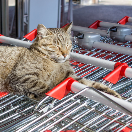 gray tabby: A gray tabby cat lies on cart and basks Stock Photo