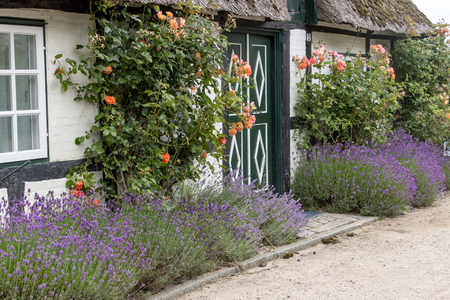 thatched roof: old half-timbered house with thatched roof, roses and lavender